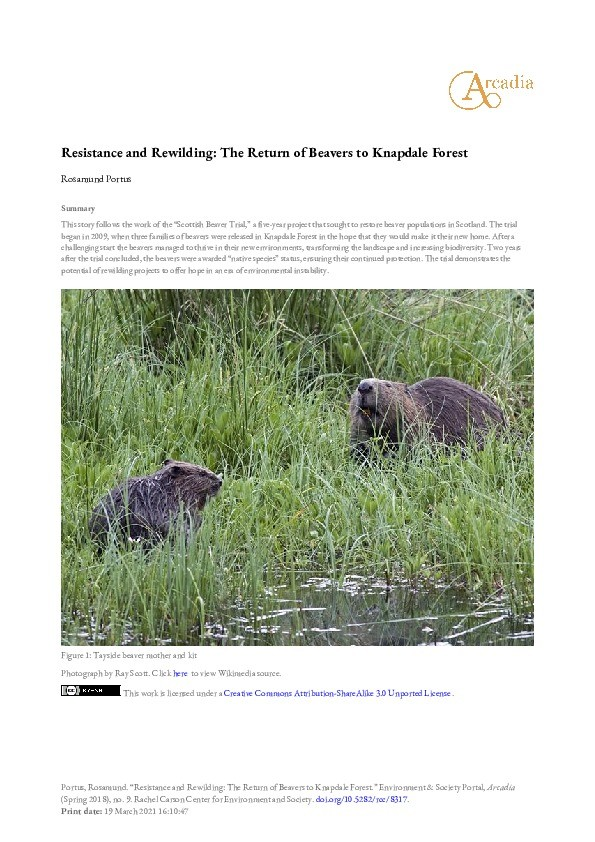 Resistance and rewilding: The return of beavers to Knapdale Forest Thumbnail